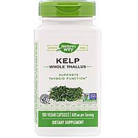 Kelp, Бурые водоросли, Natures Way, 600 мг, 180 капсул