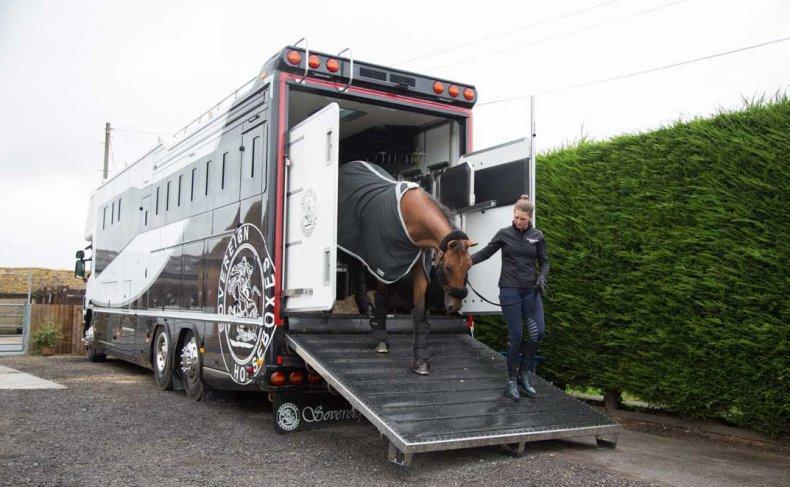 Перевозка животных ( рогатого скота)