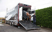 Перевозка животных ( рогатого скота), фото 1