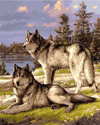 VP1131 Раскраска по номерам Пара волков, фото 2