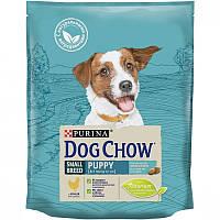 Преимущества сухого корма пурина для собак