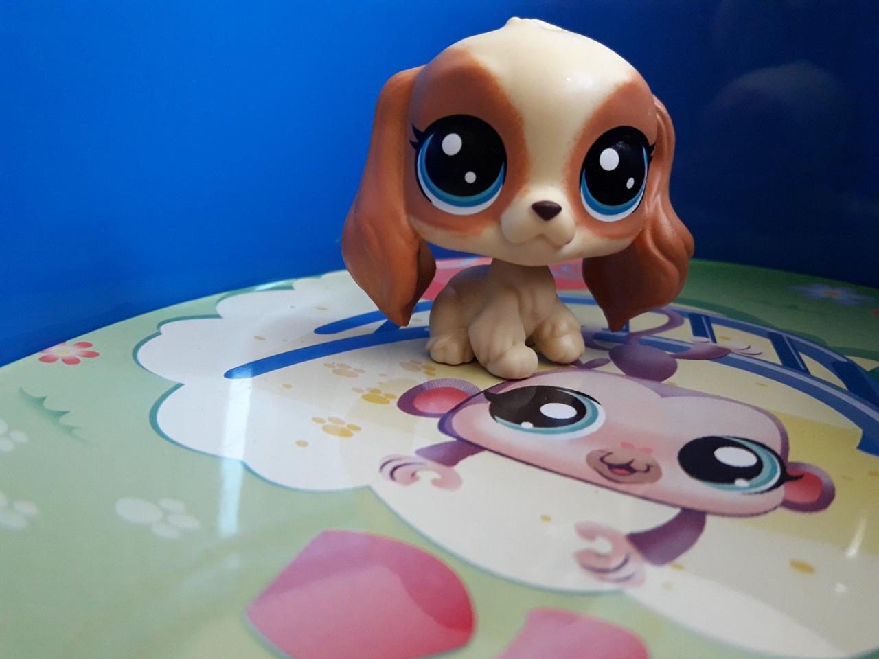 Littlest pet shop lps игрушка Hasbro лпс пет шоп собачка danielle spanielle