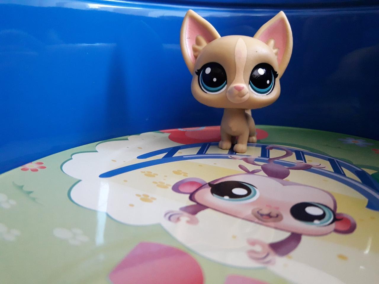 Littlest pet shop lps игрушка Hasbro лпс пет шоп собачка poco la playa