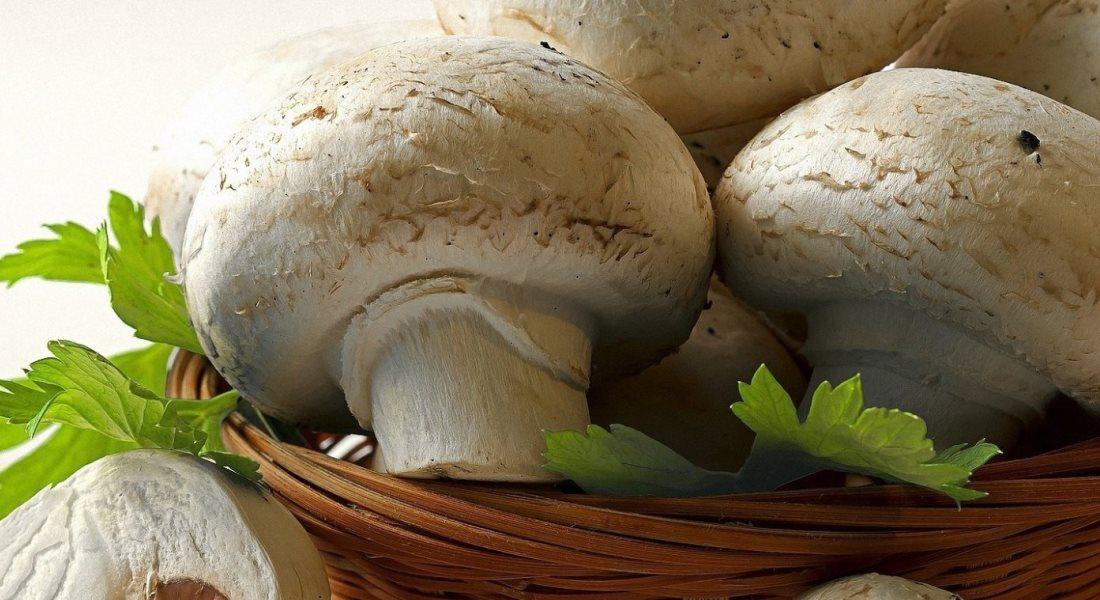 Домашняя грибница «Грибное место» Шампиньоны, Вешанка, Опята, Лисички