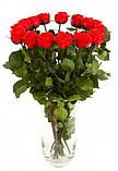 Долгосвежая роза Алый Рубин в подарочной упаковке (не вянут от 6 месяцев до 5 лет) на коротком стебле, фото 3