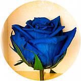 Долгосвежая роза Синий САПФИР (5 карат на коротком стебле), фото 2