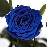 Долгосвежая роза Синий САПФИР (5 карат на коротком стебле), фото 4