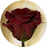 Долгосвежая роза Багровый Гранат 5 карат на коротком, фото 2