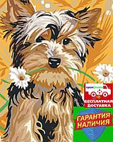 Картина по номерам Йоркширский терьер с ромашками (цветной холст) 40*50см Розпис по номерах