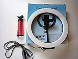 Кольцевая светодиодная Led Лампа 26 см LC666 со штативом и зажимом для телефона, селфи лампа/кольцо, фото 2