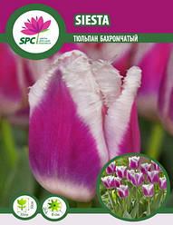 Тюльпан бахромчатый Siesta