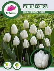 Тюльпан простой ранний White Prince
