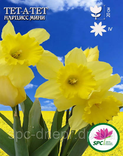 Нарцисс мелкоцветковый  Tet-a-Tet
