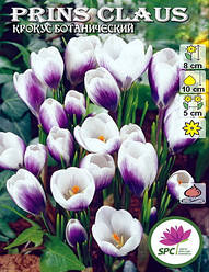 Крокус ботанический Prince Claus