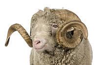 Почему стоит выбрать Функциональное шерстяное бельё Lasting Woolsens