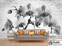 Фотообои орхидея по Вашим размерам