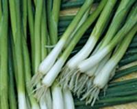 Энтита лук на перо 1 кг Moravoseed