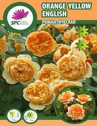 Роза романтическая Orange Yellow English
