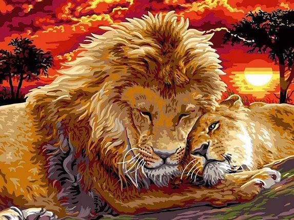 VK102 Раскраска по номерам Львиная нежность, фото 2
