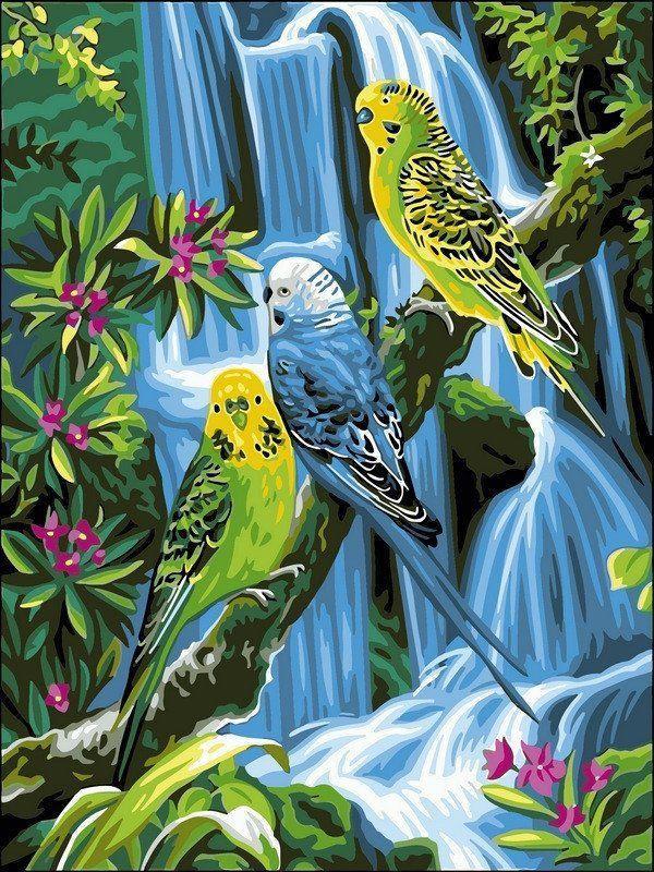 VK127 Раскраска по номерам Волнистые попугайчики
