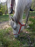Вуздяниця  лошади жеребенку  коню кантар