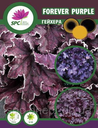 Гейхера Forever Purple, фото 2