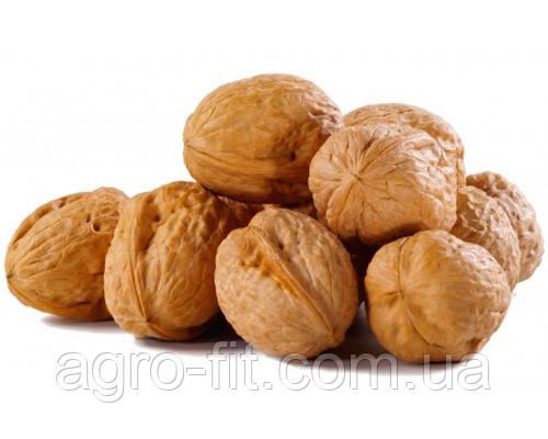 Саженцы грецкого ореха сорт Fernor