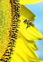 Мед натуральний (сонях) 0,72кг