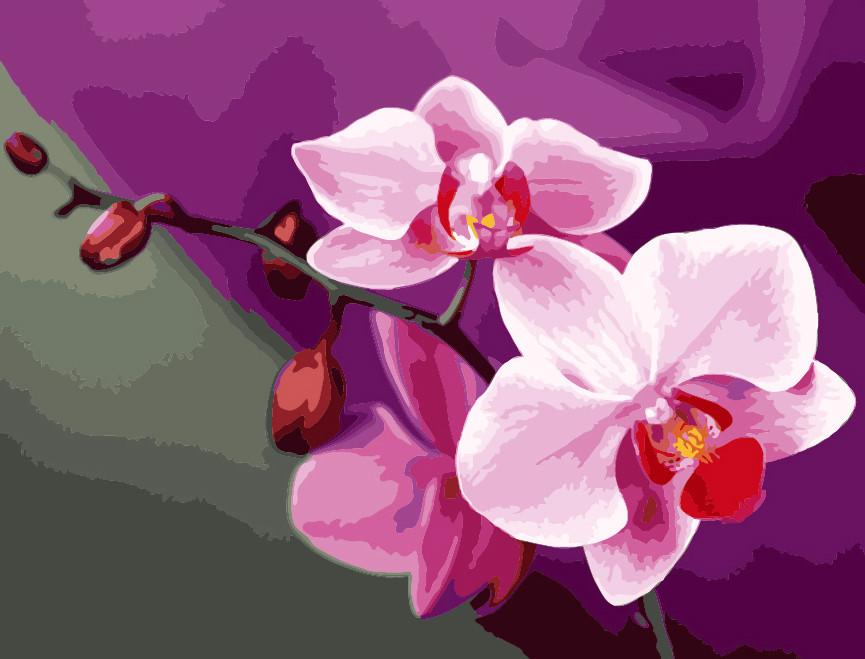 "Картина-раскраска ""Розовые орхидеи"" (KH1081) Идейка 40 х 50 см"