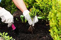 Посадка деревьев, цветов и кустарников