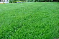 Пристрій посівного газону