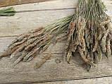 Сухоцвіт суцвіття подорожнику, Plantago 50 шт. в букеті, 30 грн., фото 7
