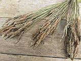 Сухоцвіт суцвіття подорожнику, Plantago 50 шт. в букеті, 30 грн., фото 9