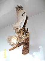 Чучело совы, фото 1