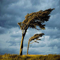 Вітроізоляційних мембрани