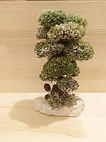 Дерево бонсай из природного лесного исландского мха цетрарии
