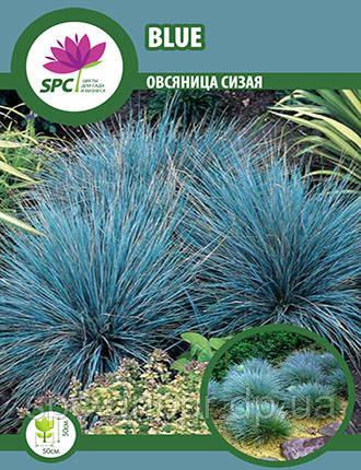 Овсяница голубая Blue, фото 2