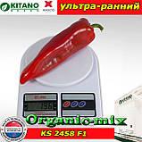 Капия KS 2458 F1, семена сладкого перца, пакет 1000 семян ТМ Kitano Seeds (Нидерланды), фото 2