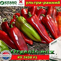 Перец сладкий Капия KS 2458 F1, пакет 500 семян ТМ Kitano Seeds (Нидерланды)