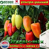 Семена перца ЯНИКА F1, пакет 500 семян, ТМ Kitano Seeds (Нидерланды), фото 2