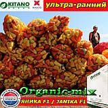Семена перца ЯНИКА F1, пакет 500 семян, ТМ Kitano Seeds (Нидерланды), фото 3