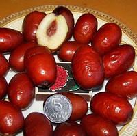 Саженцы Зизифуса Китайский 2а (сеянец) - среднего срока, крупноплодный, сладкий, унаби,финика,жужуба