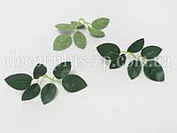 Лист розы маленький, темно-зеленый