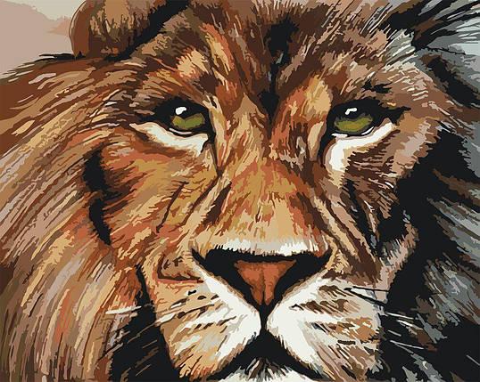 КНО4024 Раскраска по номерам Хищный взгляд 2, Без коробки, фото 2