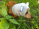 Снуд-шапка для собаки Мишка ручной работы,одежда для собаки ручной работы, фото 4