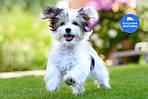 Сухой корм для щенков Purina Dog Chow Puppy Large Breed Индейка 14кг - премиум - Уточняйте наличие, фото 4