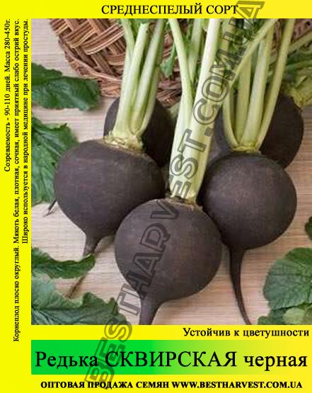 Семена редьки «Сквирская» черная 1 кг