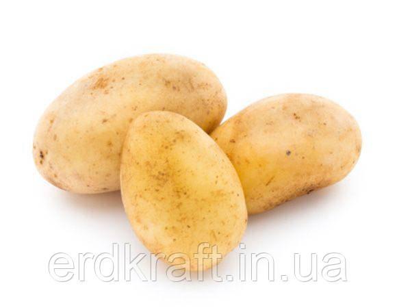 Бланшированный картофель молотый 3*10 класс А