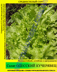 Семена салата «Одесский Кучерявец» 0.5 кг