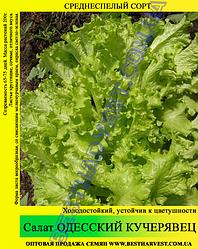 Семена салата «Одесский Кучерявец» 100 г